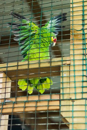 CoCo View Resort: Feathered friends