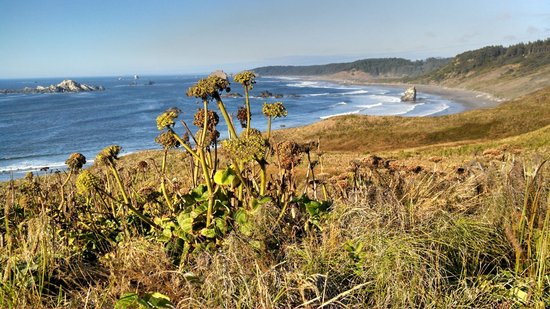 Cape Blanco State Park: Great Fauna and Waves