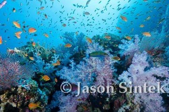 Wananavu Beach Resort: Fiji reef