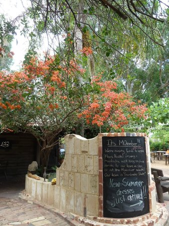Taylor's Cafe : Beautiful bougainvillea in flower at the gate