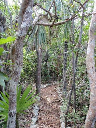 Leon Levy Native Plant Preserve: trail thru bush habitat