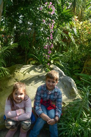 Gora Park: inside green house