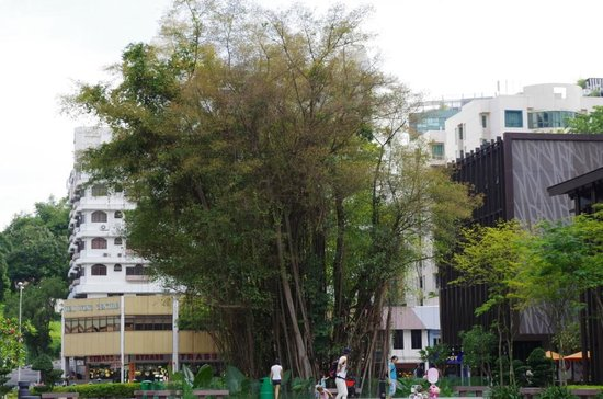Ramada Singapore At Zhongshan Park: A rustic old fig tree in the park