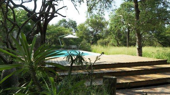 Kapama Southern Camp: Pool