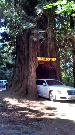 Tour-Through Tree: Hard to fit it in the picture