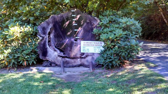 Tour-Through Tree: Redwood in History