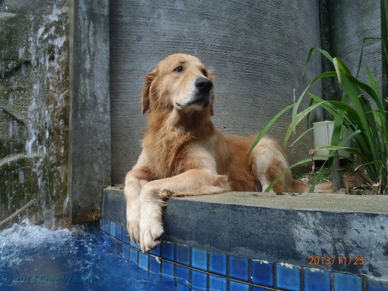 Villa Samadhi - By Samadhi: Roco, the resident welcoming party