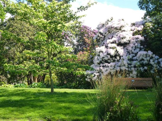 Punting on the Avon : Botanic gardens rhododendrons in flower
