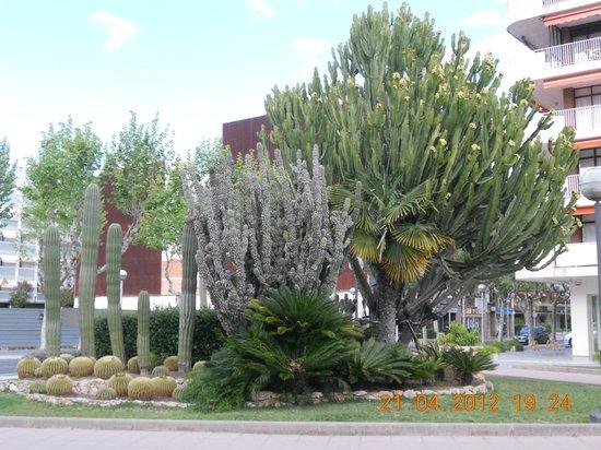 Avenida Jaume I: Салоу