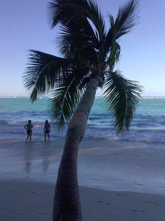 Vista Sol Punta Cana: plage dePUNTA CANA au pied de l'hôtel vista sol
