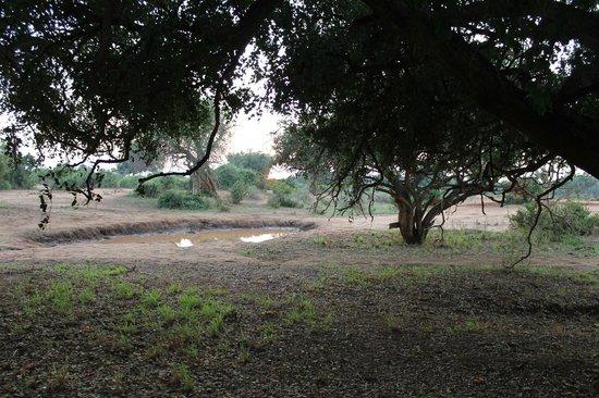 Ndololo Camp: Pozza d'acqua di fronte alla tenda n. 10