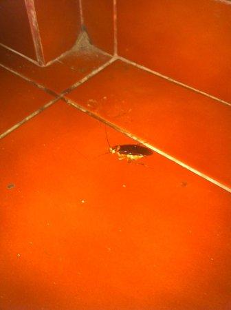 Warji House 2: Cucarachas en la habitación