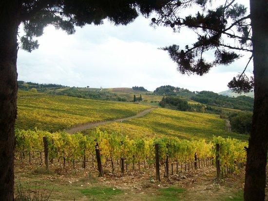 Agriturismo Podere Tegline : Autumn in Chianti.