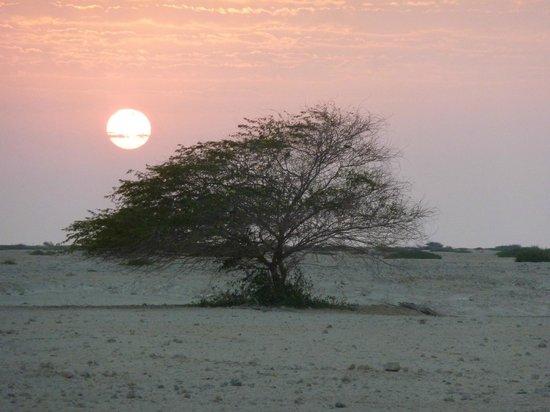 Anantara Desert Islands Resort & Spa: Sunset by lagoon
