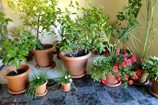 Mina Hotel: Indoor plants at the hotel