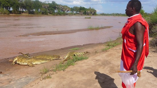 The crocodiles that live at Tsavo Buffalo Camp