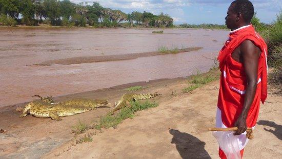 The crocodiles that live at Tsavo Buffalo Camp