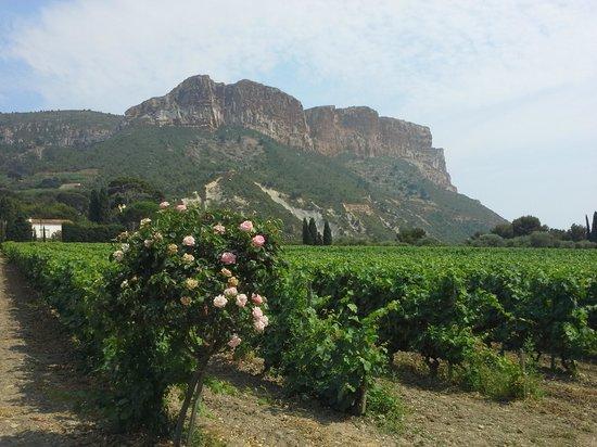 L'Avila Cassis : Clos Ste Magdeleine winery Cassis