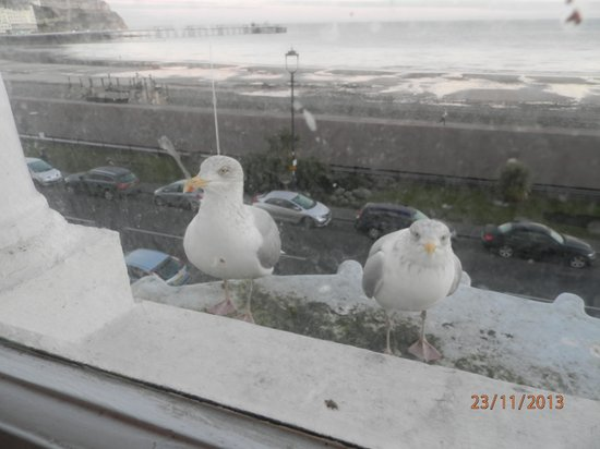 Iris Hotel : Visitors who called outside the window of room 202 on both mornings of our stay!