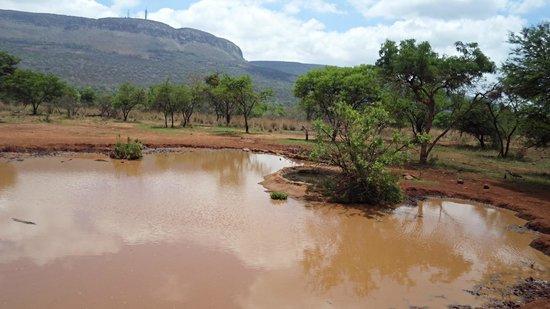 Askari Game Lodge & Spa: Waterhole