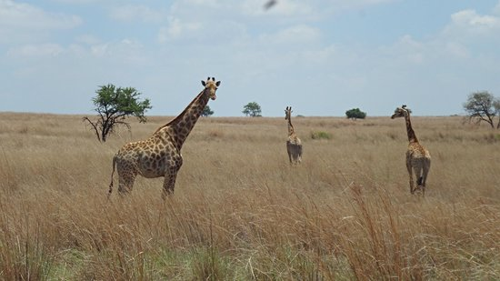 Askari Game Lodge & Spa: On a game drive
