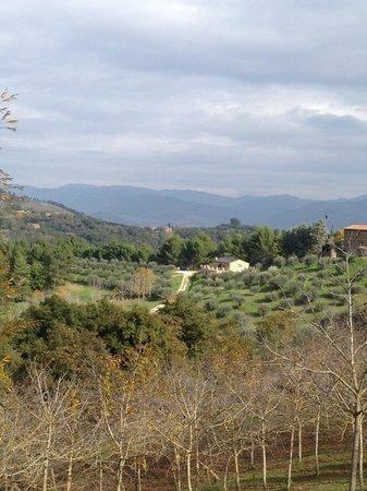 "Agriturismo La Fonte : View of our apartment, ""Il Lago"", from the farm's walnut grove"