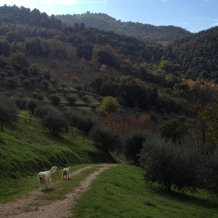 Agriturismo La Fonte: Olive trees and friendly dogs!