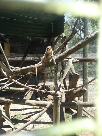 Monkey Town Primate Centre: Squirrel monkey