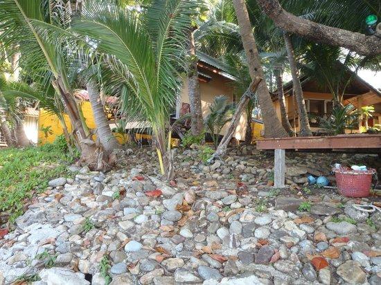 Paradise Palms Resort: Strand/Frontsidebungalow