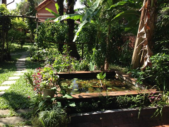Cassia Cottage: fish pond in the garden