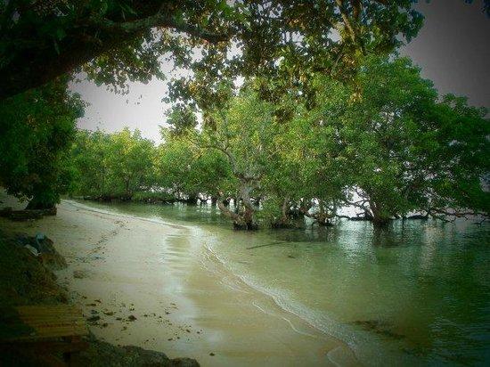 Raja Laut Dive Resort: beach