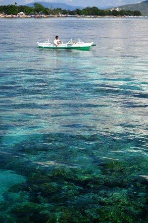 Raja Laut Dive Resort: coral reef