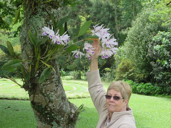 Makaranga: orchids growing in the tree
