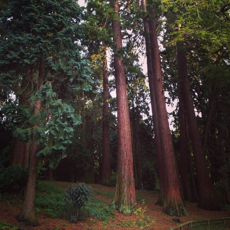 Coombe Abbey Country Park: Nature