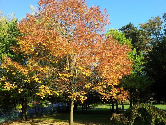 John Coles Park: The summer is coming to an end