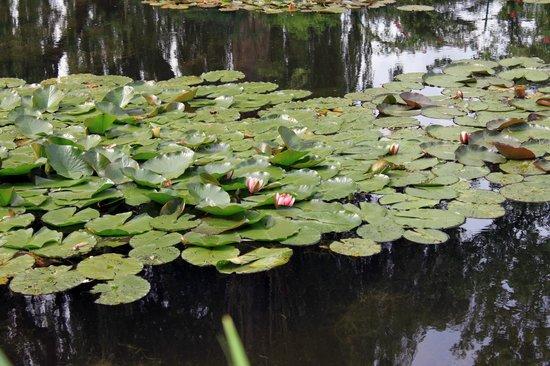 Maison et jardins de Claude Monet : LAGO
