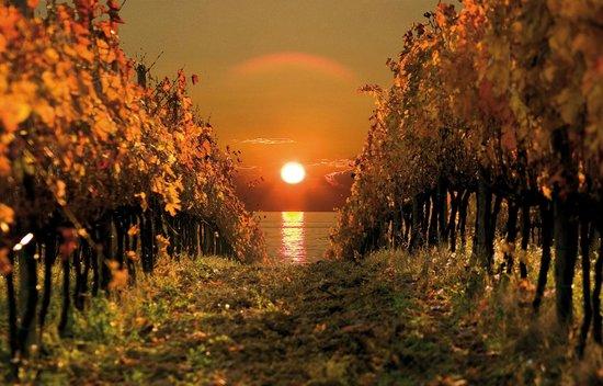 Slovenia Tours & Excursions Tour As: Wineyards in Goriska Brda