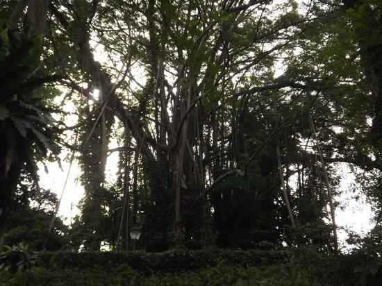 Fleur exotique photo de jardin botanique de singapour for Jardin botanique singapour