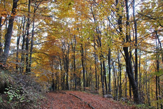 Vitosha Mountain: In the forest