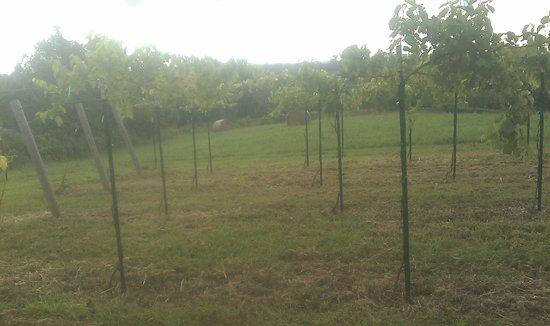 Fence Stile Vineyards & Winery: Winemaking starts in the vineyard!