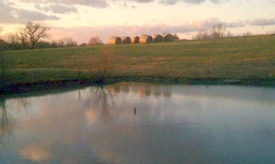 Fence Stile Vineyards & Winery: Peaceful Evening