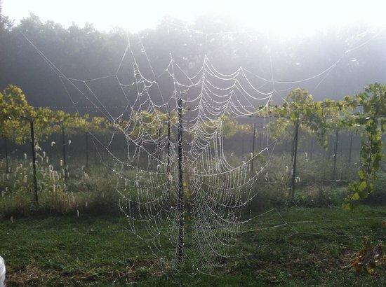 Fence Stile Vineyards & Winery: Nature