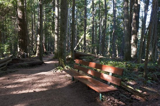 Heritage Forest : Benches throughout to sit and appreciate Nature.