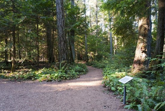 Heritage Forest : Easy walking on mulch trails.
