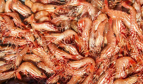 Go Fish Charters: A bucket full of spot prawns