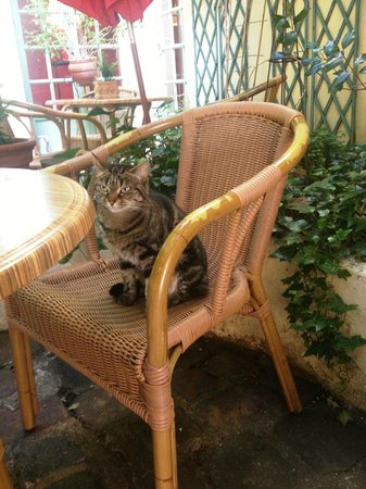 Le Vieux Carre: Little Visitor :)