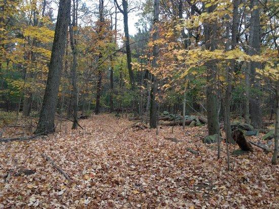 Blue Hills Reservation: A trail on the Blue Hills taken October 31