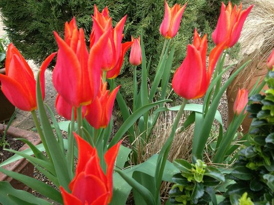 Bridge of Flowers: tulips