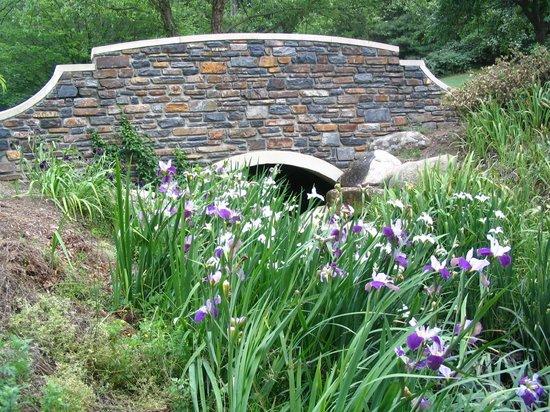 Sarah P. Duke Gardens: Gorgeous scenery