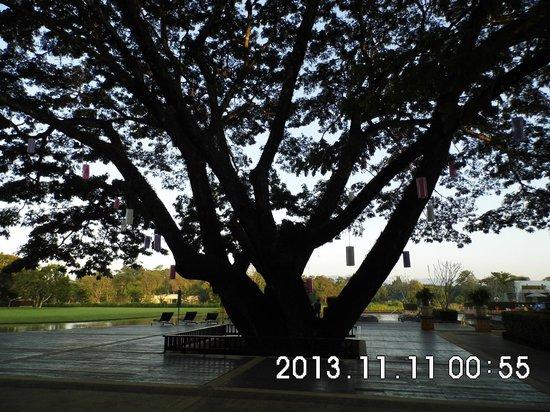 Le Meridien Chiang Rai Resort: árboles